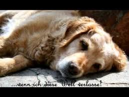 Abschied Nehmen Ein Hund Erzählt Vom Tod Youtube