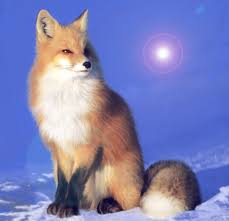 Image result for foxes images