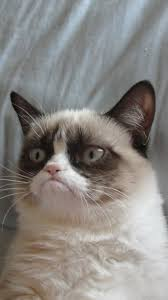 grumpy cat htc hd wallpaper