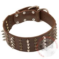 leather collar for central asian shepherd walking in style