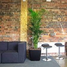 office plant displays. Fine Office Bushy Kentia Palm Display On Office Plant Displays