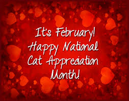 Image result for happy february cat images