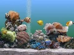 Аквариумы, купить рубок для аквариума продажа морских ...