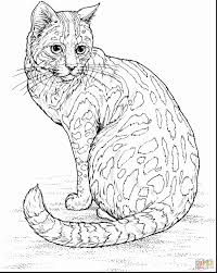 Free Printable Coloring Pages For Adults Cats Sleekadscom