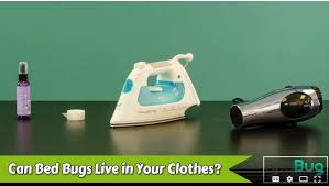 can bed bugs live in your clothes what to do with bedbugs infographic