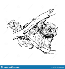 эскиз руки вычерченный предпосылки коалы черным по белому