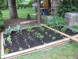 my backyard vegetable garden veggie