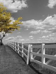 black white yellow tree pop of color landscape wall art matted picture