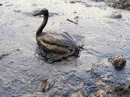 how does oil spills affect the environment