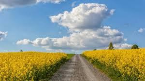 outdoor desktop backgrounds. Landscape Way Road Heaven Nature Field Clouds Outdoor Beautiful Scenery Wallpaper Desktop Backgrounds