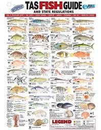 Afn Tasmania Fish Id Card Tas