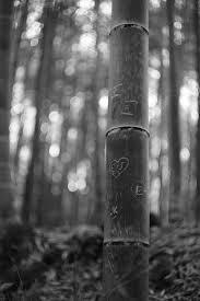 竹林の小径の落書き By Palakona Id5569726 写真共有サイト