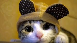 cute cat hd wallpaper desktop background
