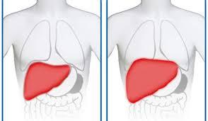 Rezultat slika za jetra
