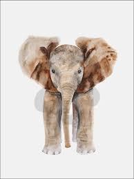 oopsy daisy baby elephant canvas wall art on african elephant canvas wall art with oopsy daisy baby elephant canvas wall art kids n cribs