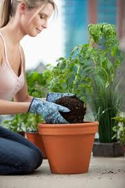 garden decor blog  essential gardening tools for apartment dwellers apartment garden blo
