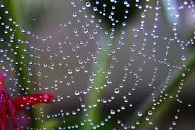 Image result for images spider webs crystal like brilliant