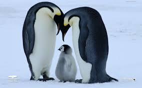 penguin love wallpaper. Simple Love Cute Penguin Pictures  Lovely Wallpapers Penguin Birds Cute Wallpapers  Pictures Baby Animals For Love Wallpaper E