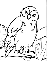 Owl Coloring Pages Coloring Page 17 Free Printable Coloring