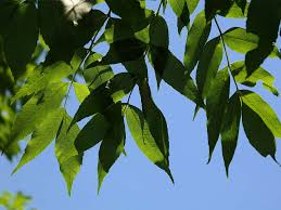 15 Trees Every Outdoor Lover Should Learn To Identify