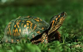Image result for tortoise