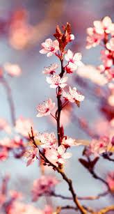 27 best MATTEREVOLUTION Lost Cherry images on Pinterest