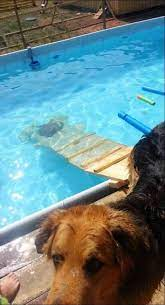 diy dog pool ramp 57 ideas dog pool