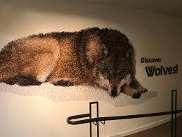 International Wolf Center (Ely) : 2021 Ce qu'il faut savoir pour votre  visite - Tripadvisor
