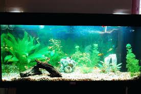fish tank decor ideas decorations impressive ...