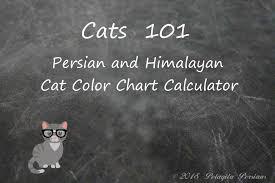 Cat Color Chart Persian Cat Color Calculator Pelaqita Persian Cats And Kittens
