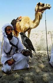 البدوية …الراعي  والرعية!