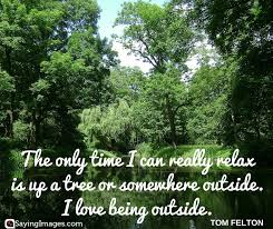 Tree Quotes Inspiration 48 Best Tree Quotes SayingImages
