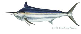 the old man and the sea summary a marlin to