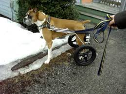 can dogs urinate in a dog wheelchair