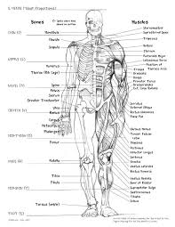 Small Picture 47 best MusculoSkeletal System images on Pinterest Human anatomy
