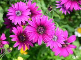 image of purple flowers taken in hangzhou