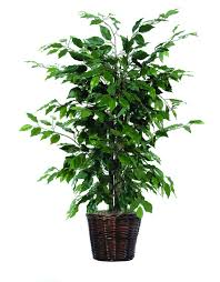 Decorative Indoor Trees Similiar Fake Plant Decor Keywords