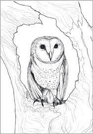 Kleurplaten Volwassenen Dieren Google Zoeken Decor Ideas Owl