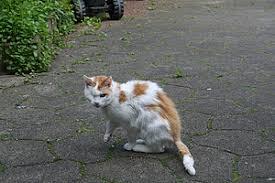 Kat vermagert maar eet goed