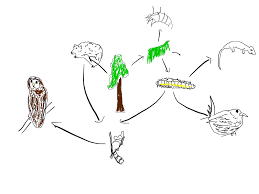web drawing rwfoodweb mr saporas biolosite