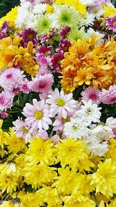 flowers flower beautiful flower free picture