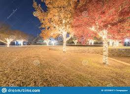 Fall Color String Lights Beautiful Outdoor Holiday Tree Lights And Fall Color At