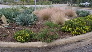 Image result for native grasses