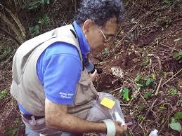 Qué es la micología y por qué se realiza Nicaragua   Revista Naturalista