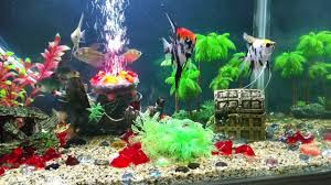 Fish Tank Accessories And Decorations Fish tank decorations is good novelty aquarium decorations is good 4