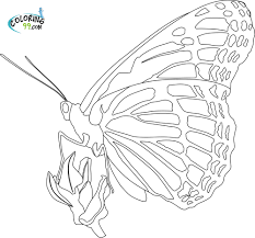 Small Picture Lovely Monarch Butterfly Coloring Pages 42 On Free Coloring Book