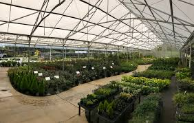 the garden center acres of greenhouses shrubhouses and outdoor beds filled with a huge selection of shrubs trees vines grasses groundcovers