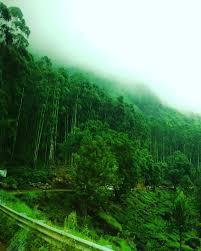 At Munnar Hill Station Kerala India ...