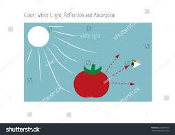 Color And Light Absorption Illustration White Light Reflection Absorption Color Stock