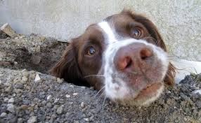 7 tips to stop your dog from digging up the yard